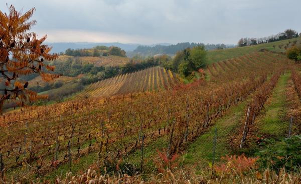DSC_3244.a - Cortazzone - Vignobles