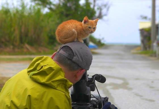 Foto blog fotografo di animali fa amicizia con un gattino amorevole 4